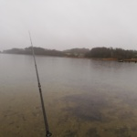 1 fisk i fjorden